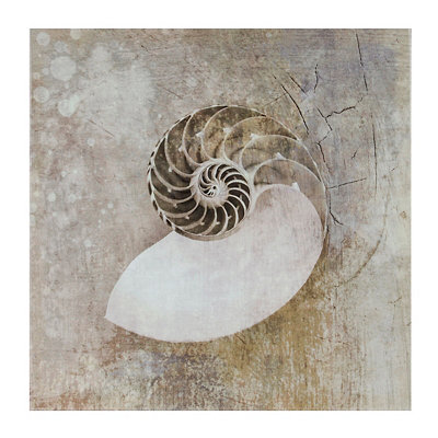 Sea Shells I Canvas Art Print
