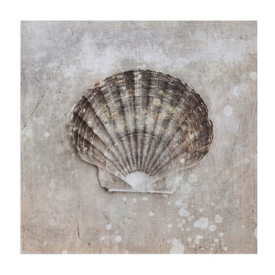 Sea Shells II Canvas Art Print