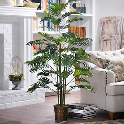 Areca Palm Tree with Basket Planter, 5 ft.
