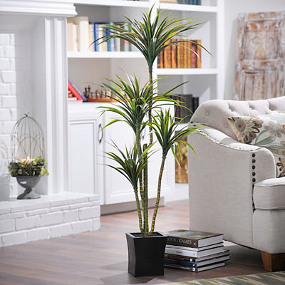Yucca Tree with Wood Planter, 55 in.