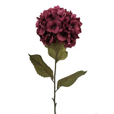 Purple Hydrangea Stem