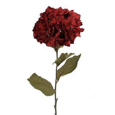 Red Hydrangea Stem