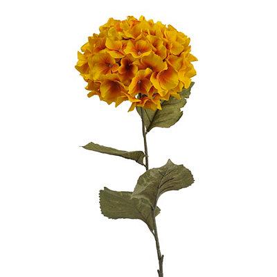 Gold Hydrangea Stem