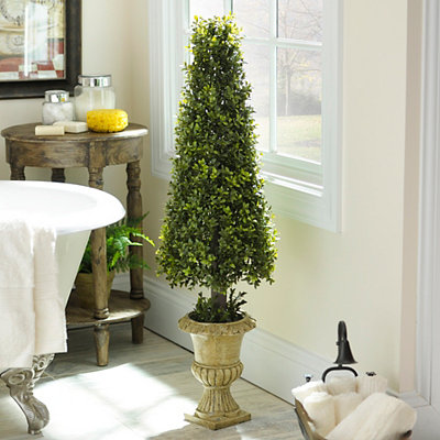 Boxwood Cone Topiary, 46 in.
