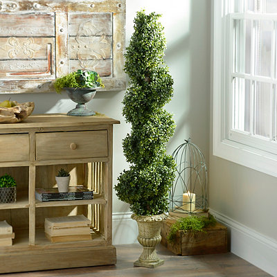 Boxwood Spiral Topiary, 54 in.