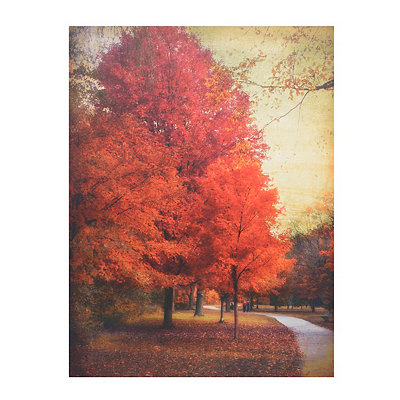 Among the Maples Canvas Art Print