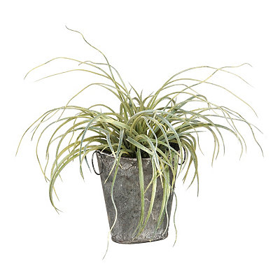 Curly Monkey Grass Arrangement