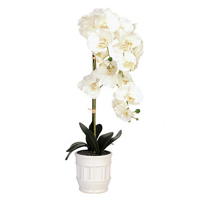 Potted White Orchid Arrangement