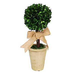 Boxwood Topiary Arrangement with Burlap Bow