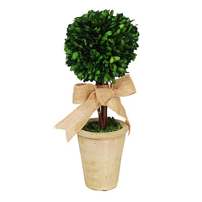 Boxwood Topiary Arrangement with Burlap Bow
