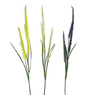Dog Tail Stems