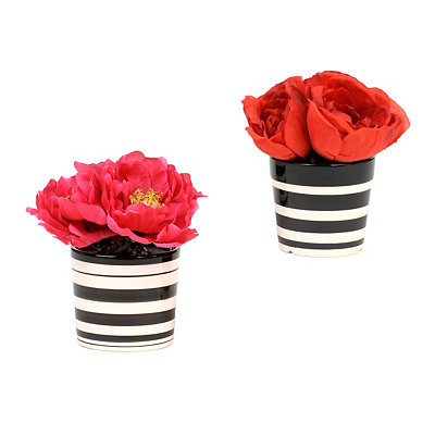 Peony Arrangements in Striped Pot
