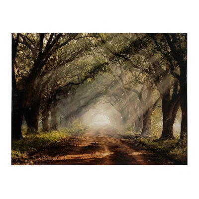 Evergreen Plantation Canvas Art Print