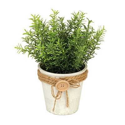 Springeri Button Pot Arrangement