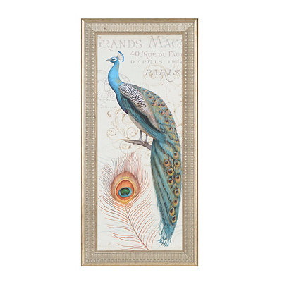 Peacock Majesty II Framed Art Print