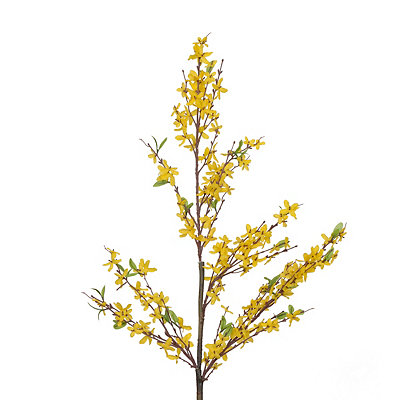 Yellow Forsythia Branch