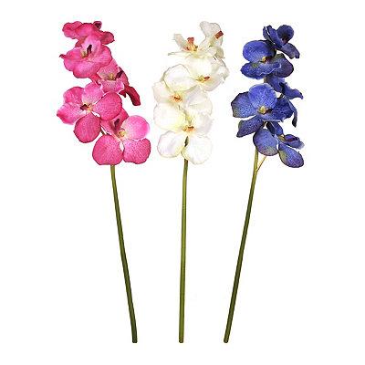 Vanda Orchid Stems