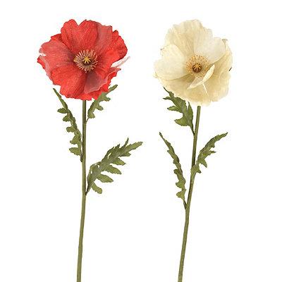 Spring Poppy Stems