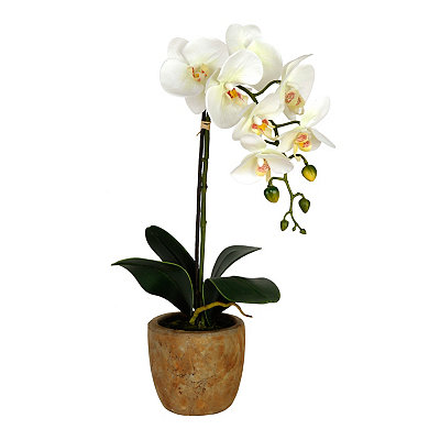 White Orchid in Bronze Pot Arrangement
