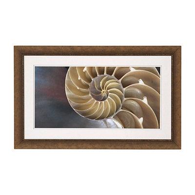 Nautical Shell Framed Art Print