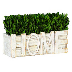 Home Boxwood Arrangement