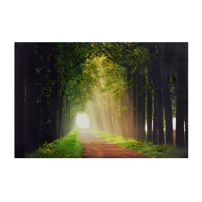 Forest Pathways Canvas Art Print