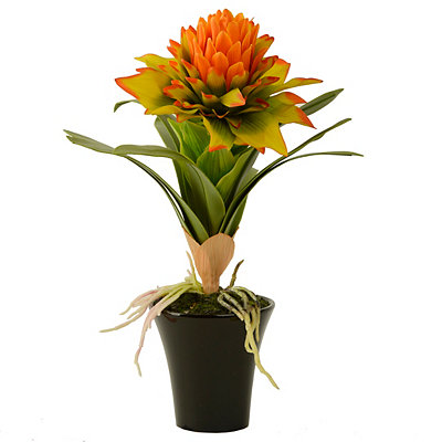 Yellow Star Bromeliad Arrangement