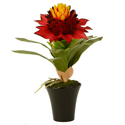Red Star Bromeliad Arrangement