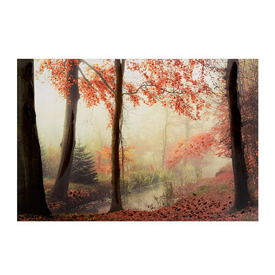 Fall Forest Canvas Art Print