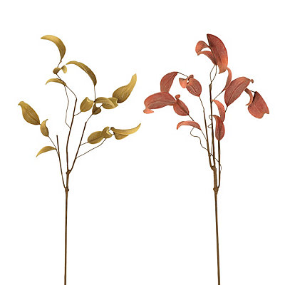 Eucalyptus Leaf Stems
