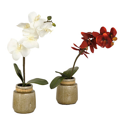Orchid Arrangements in Gray Pot