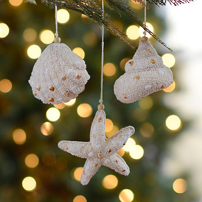 Sandy Seashell Ornaments, Set of 3