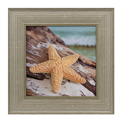 Seashells and Driftwood II Framed Art Print