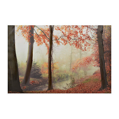 Fall Forest Canvas Art Print