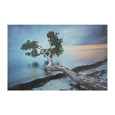 Coastal Branches Canvas Art Print