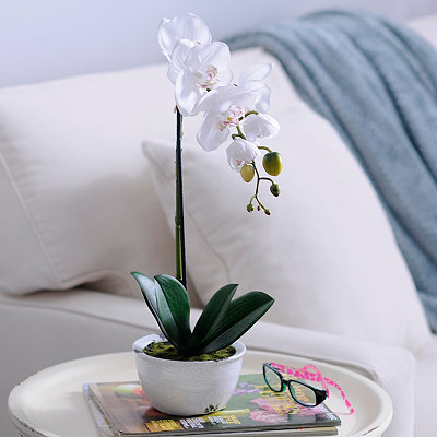 White Orchid Arrangement in Ceramic Pot