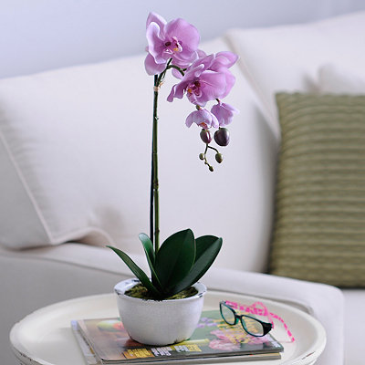Lavender Orchid Arrangement in Ceramic Pot