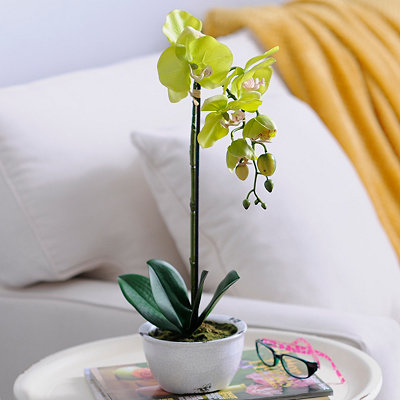 Green Orchid Arrangement in Ceramic Pot