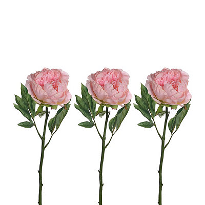 Light Pink Peony Stems, Set of 3