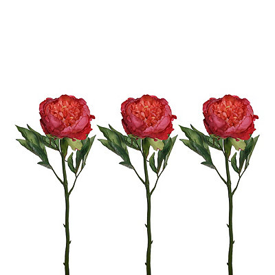Hot Pink Peony Stems, Set of 3