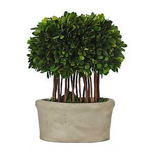 Boxwood Topiary Arrangement in Natural Planter
