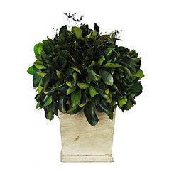 Preserved Ilex Topiary
