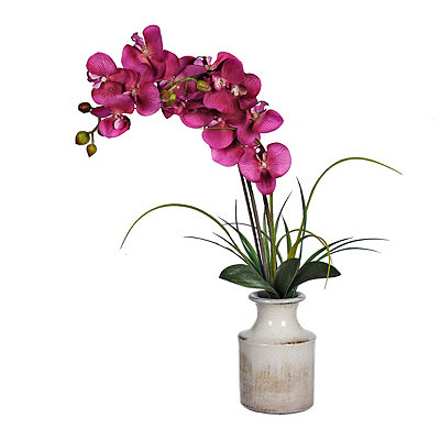Pink Orchid in a Weathered Urn