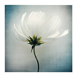 Linen Cosmos I Canvas Art Print