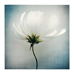 Linen Cosmos I Canvas Art Print