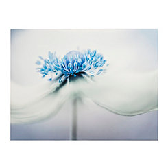 Anemone Blues Canvas Art Print
