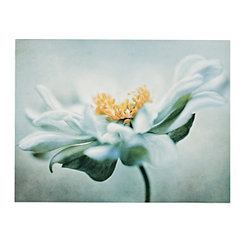 Anemone Dream Canvas Art Print