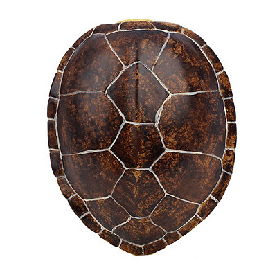 Brown Faux Turtle Shell Wall Plaque