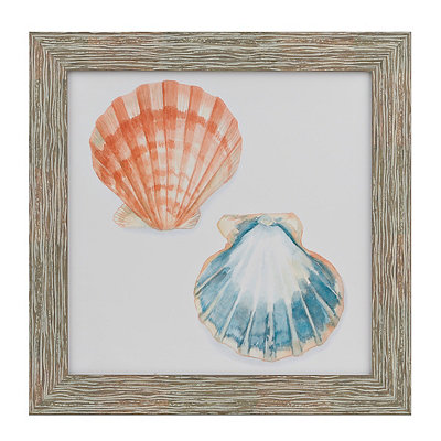 Shell Collection I Framed Art Print