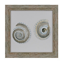 Shell Collection III Framed Art Print